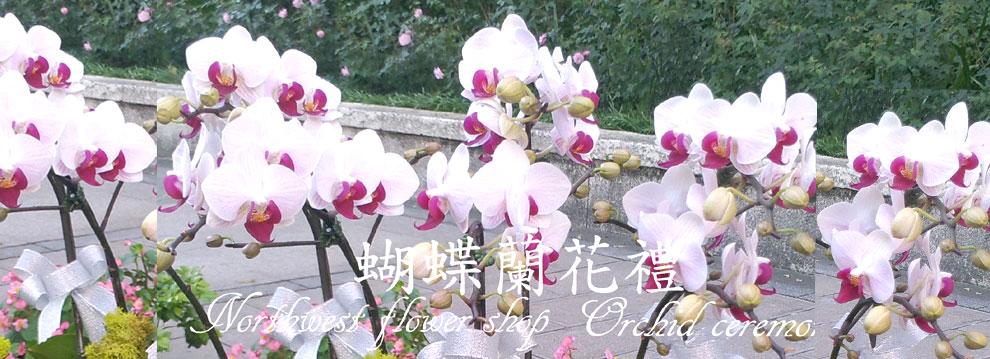 蝴蝶蘭花禮